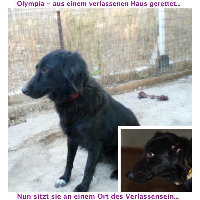collageOlympia