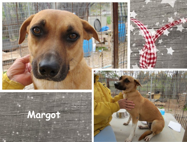 No 15 Margot