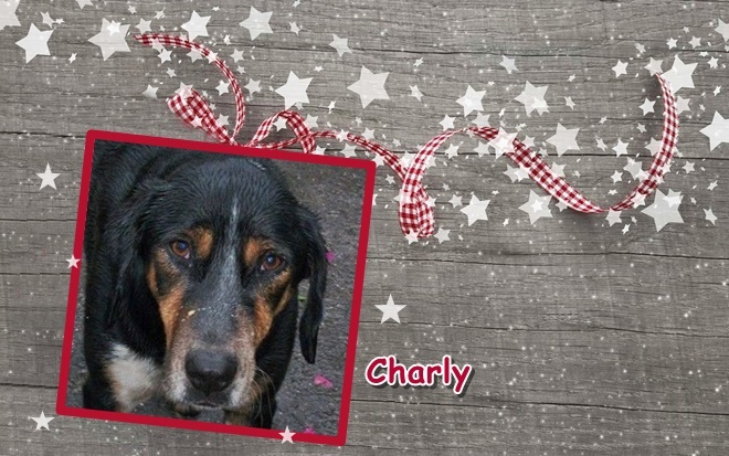 20151220 charly